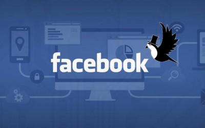 Sparrow facebook