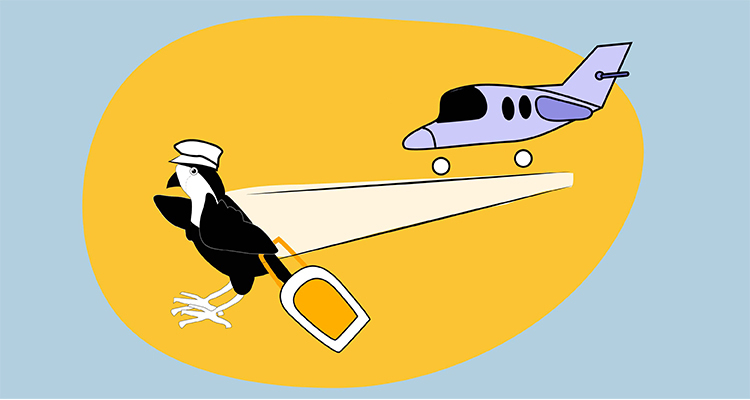 Sparrow - Aeroplane