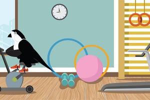 Sparrow Gym 750x400