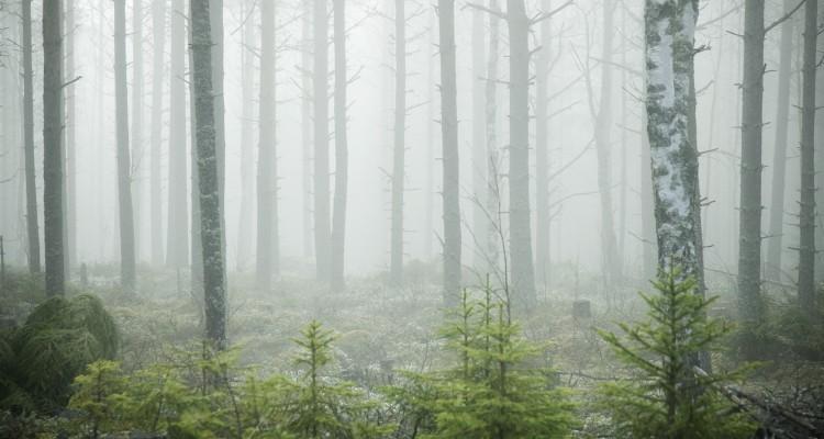 Dimmig skog, Täfteå, Norrland