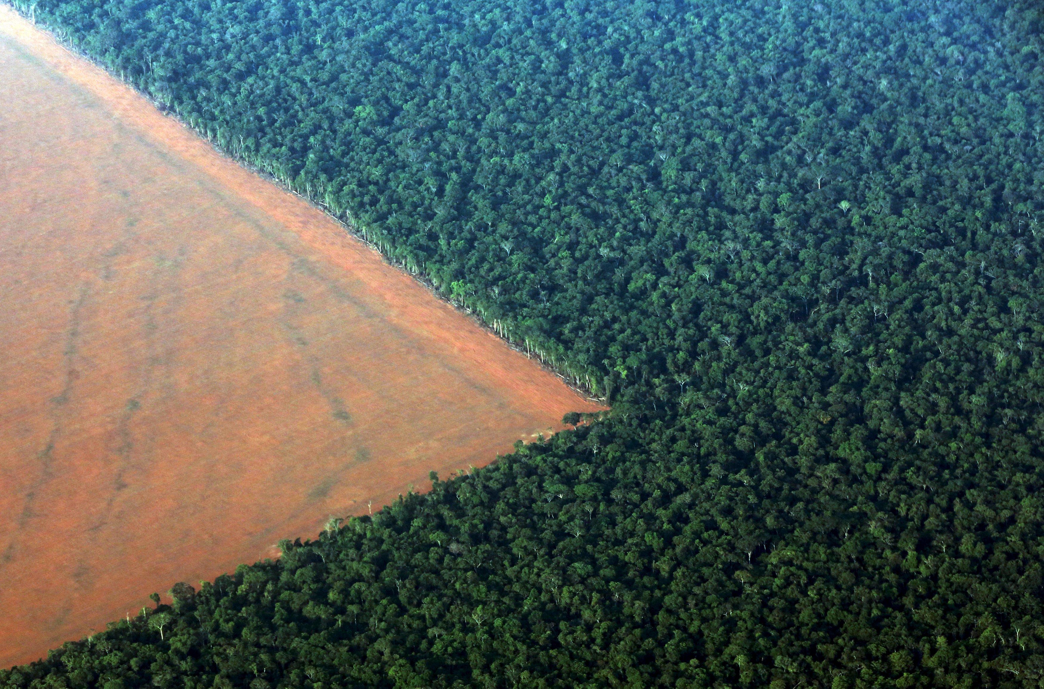 Hutan hujan Amazon, berbatasan dengan tanah deforestasi yang disiapkan untuk menanam kedelai, terlihat dalam foto udara yang diambil dari negara bagian Mato Grosso di bagian barat Brasil, Minggu (4/10). Brasil akan memproduksi 97,8 juta ton kedelai pada 2015/16 yang merupakan rekor, meningkat 3,2 persen dibanding produksi 2014/15, tetapi jumlah tambahan tersebut akan disimpan di Brasil, dengan sedikit dampak pada  jumlah ekspor, diperkirakan oleh Asosiasi Industri Minyak Sayur Brasil (ABIOVE) kemarin. ANTARA FOTO/REUTERS/Paulo Whitaker.