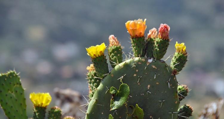 cactus-166240_1280