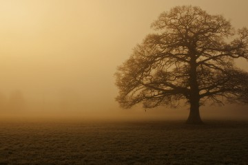Oak Tree. Flickr - Marilyn Peddle.
