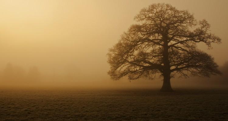 Oak Tree. Flickr - Marilyn Peddle.