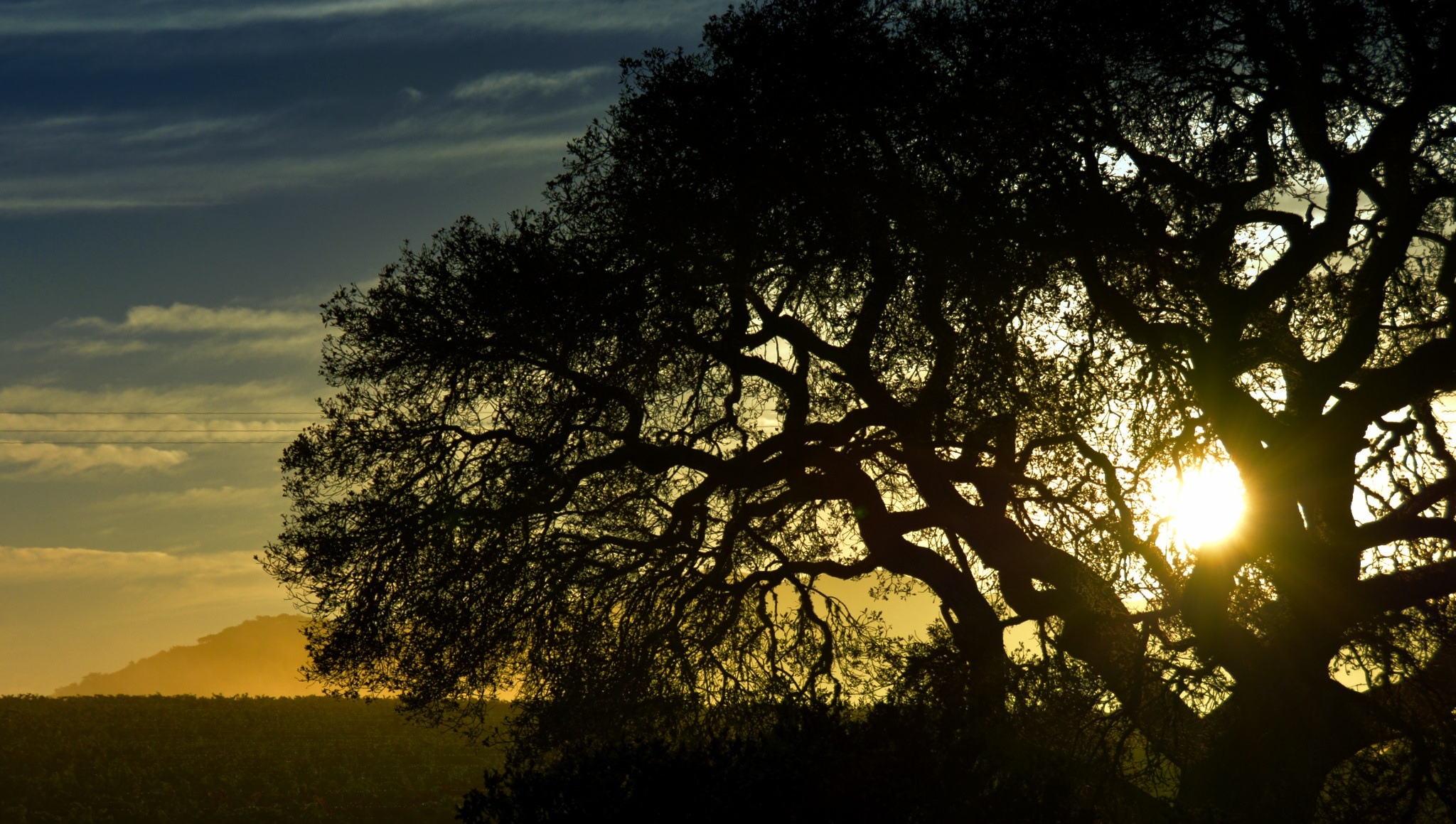 Oak tree on Hwy 101 north of Santa Maria as the sun was coming up. Flickr - Harold Litwiler.