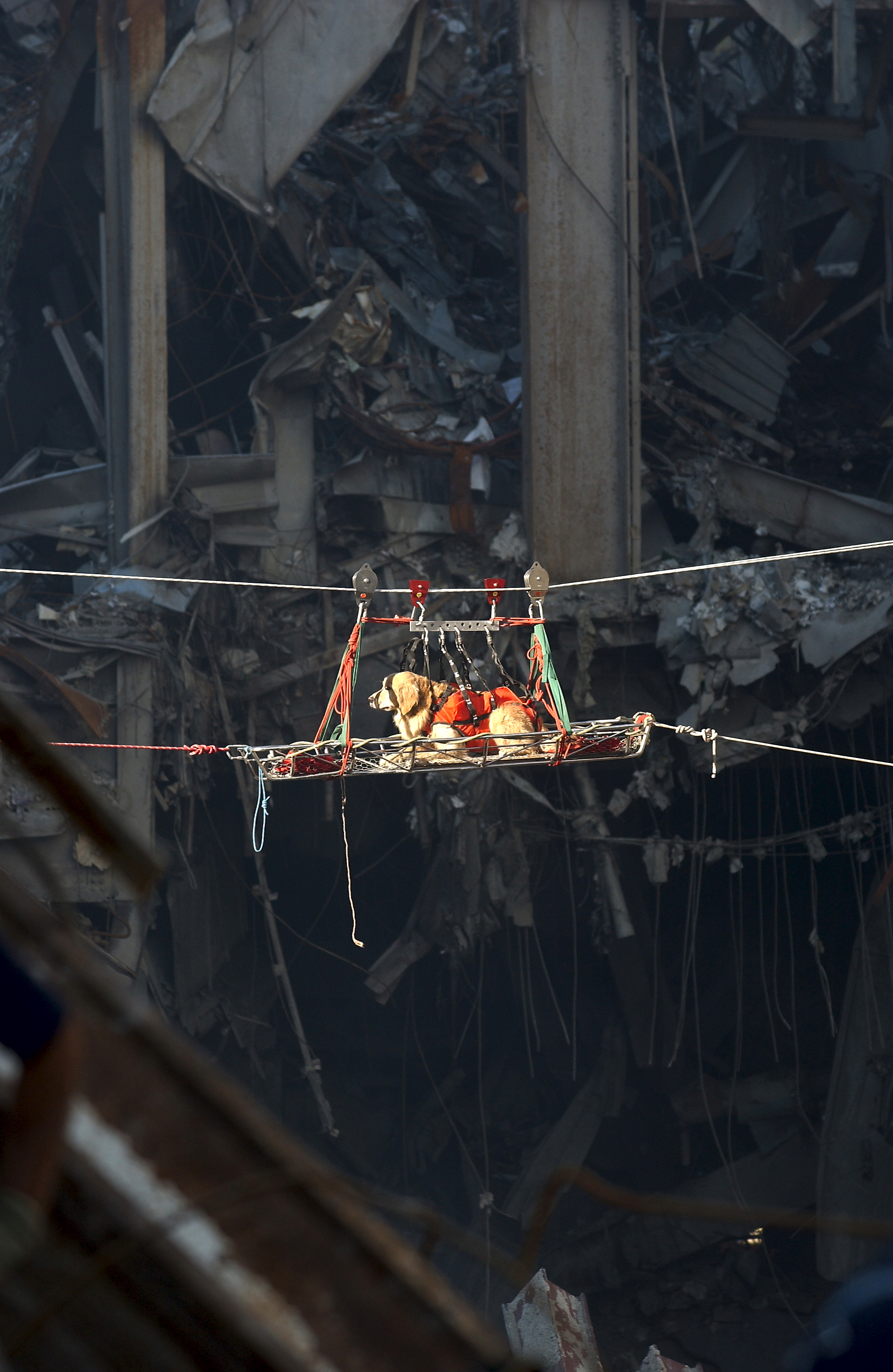010915-N-3995K-022 New York, N.Y.  -- A rescue dog is transported out of the debris of the World Trade Center.  The twin towers of the center were destroyed in a Sept. 11 terrorist attack.  U.S. Navy Photo by Journalist 1st Class Preston Keres.  (RELEASED) Flickr - Beverly.