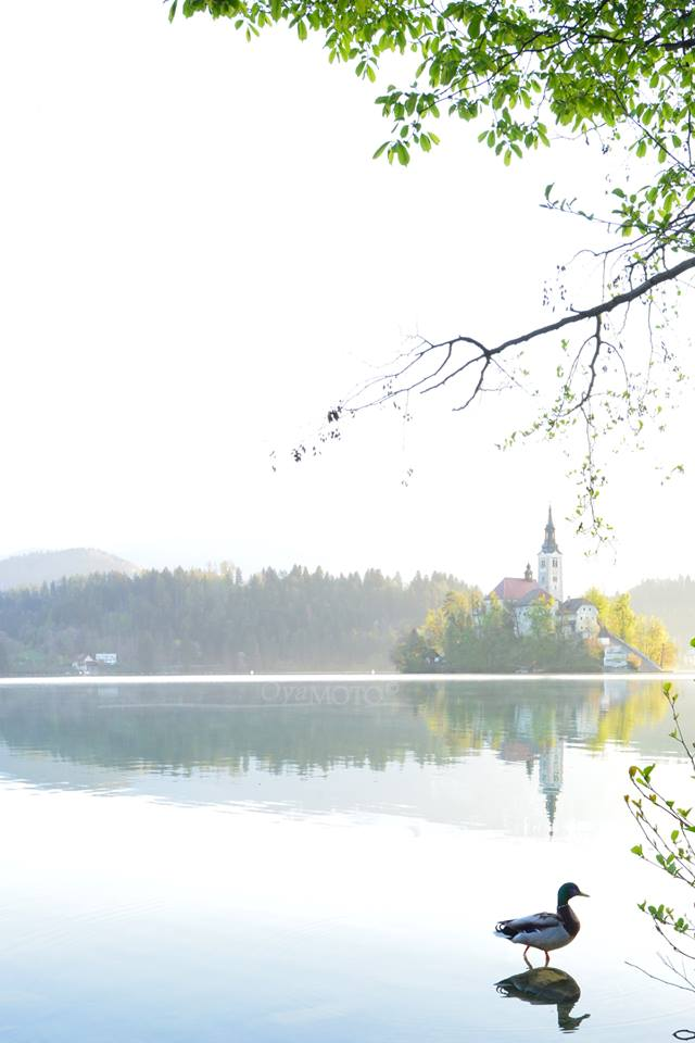 LakeBled2