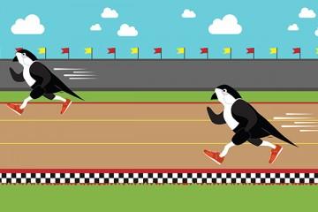 Sparrow Running
