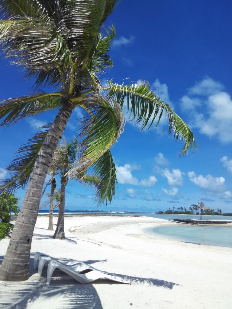 Tanaman Tepi Pantai 1
