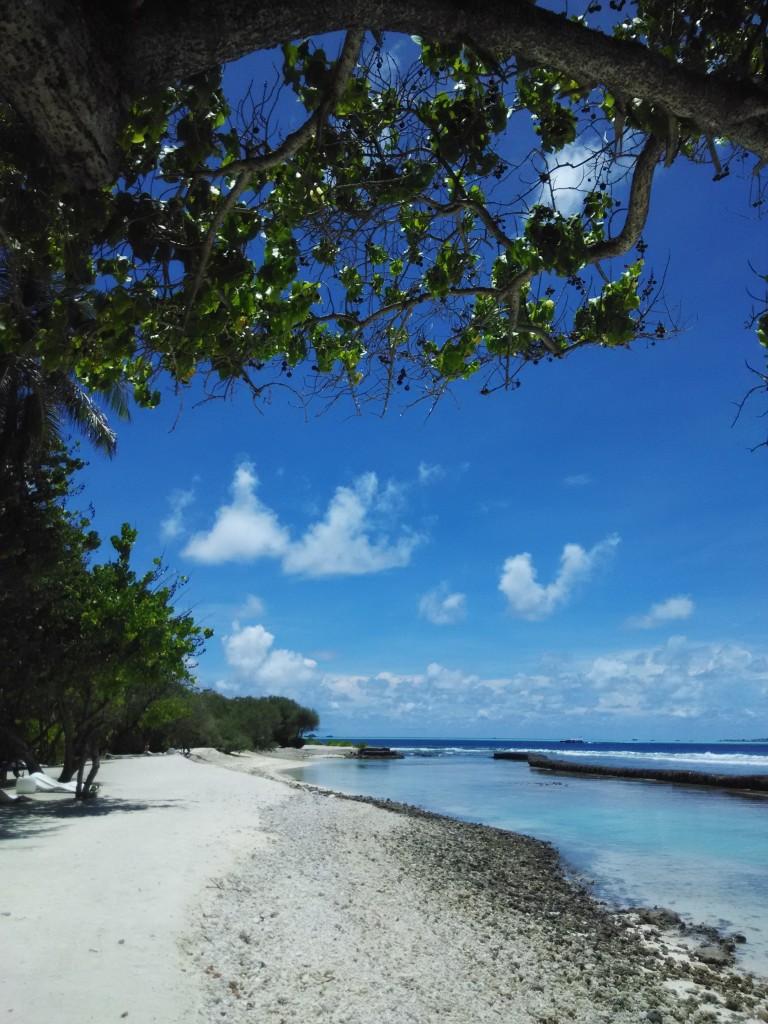 Tanaman Tepi Pantai 5