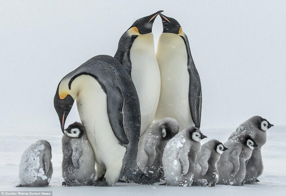 Baby Penguin 7