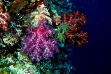 Coral Takabonerate 4