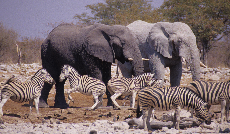 Etosha National Park - NAMIBIA. Flickr - Mazzali.