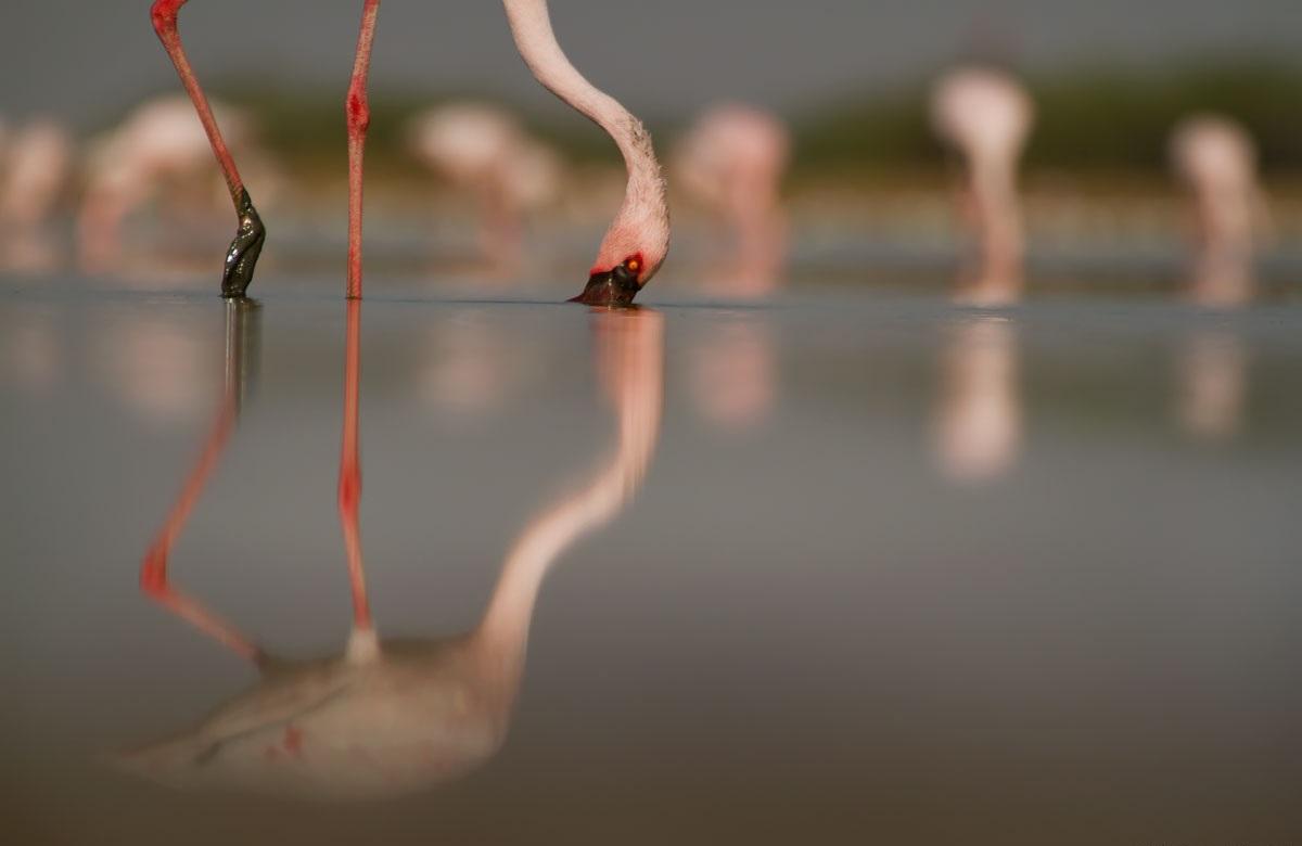 Flickr - Nitish Bindal Agrawal.