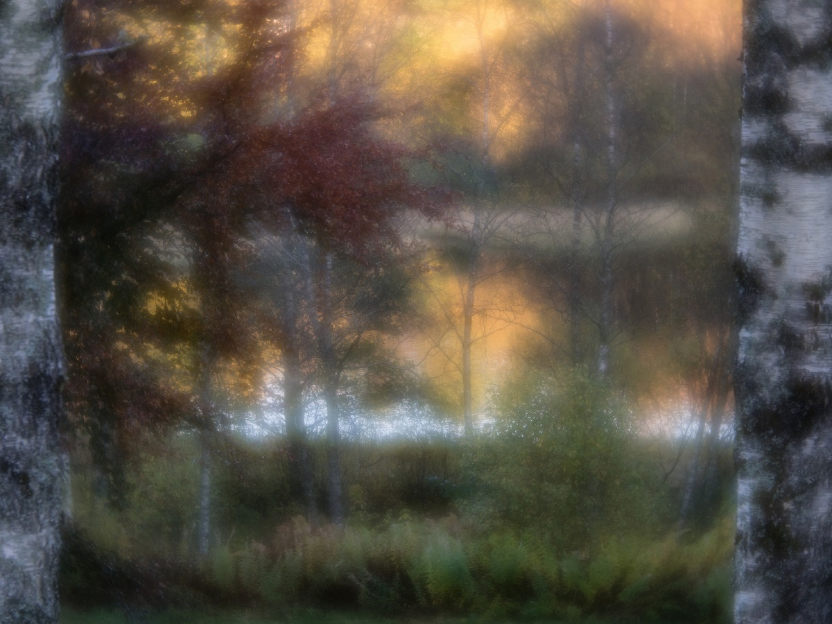 Framed by Birches - Anne Worner