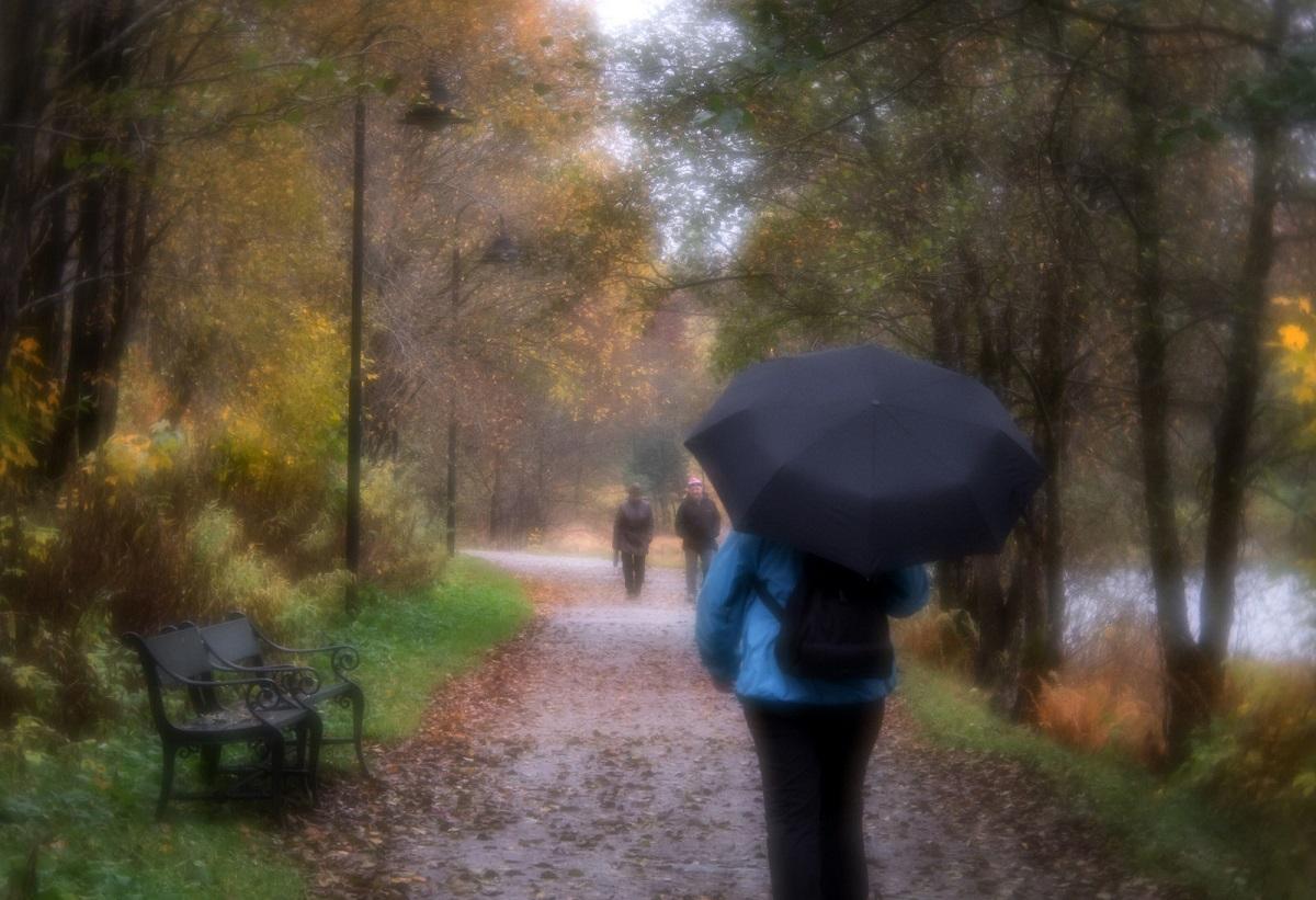Scenic Walk - Anne Worner