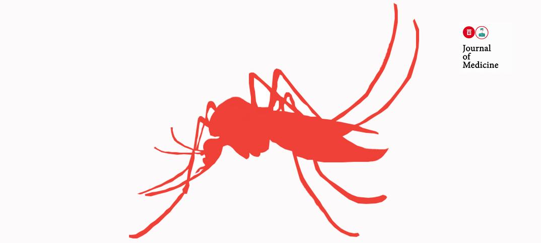 Nyamuk Zika 4 (o)