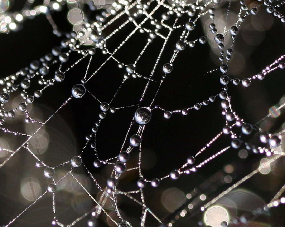 Flickr - oh what a tangled web - Jenny Downing