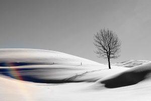 Flickr - snowbow - Jenny Downing